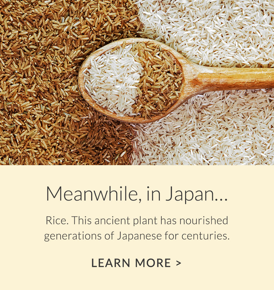 Meanwhile, in Japan...Rice. This ancient plant has nourished generations of Japanese for centuries. Learn more.